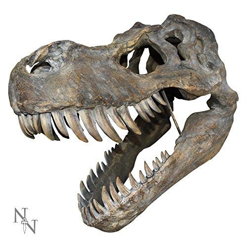 Tyrannosaurus Rex dinosaurio cráneo grande 51,5cm