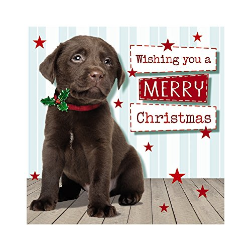 Me to you up close 3d wishing you a merry christmas biglietto d' auguri chocolate lab puppy