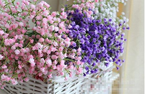 Qulista Samenhaus - 30pcs Schleierkraut Mix Beetpflanze rosa/blau/weiß/lila/gelb/rosa | wettefest Blumensamen winterhart mehrjährig Ideal für Beet und Balkon