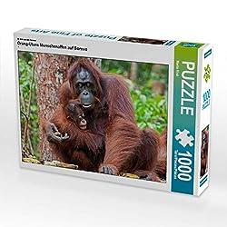 CALVENDO Puzzle Orang-Utans Menschenaffen auf Borneo 1000 Teile Lege-Größe 64 x 48 cm Foto-Puzzle Bild von Martin Ristl