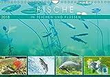 Fische in Teichen und Flüssen (Wandkalender 2018 DIN A4 quer): Großartige Unterwasseraufnahmen von Fischen in unseren Gewässern (Monatskalender, 14 [Kalender] [Apr 13, 2017] CALVENDO, k.A.