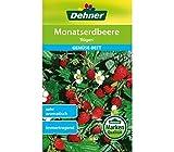 Dehner Gemüse-Saatgut, Monatserdbeere