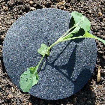 cabbage-collars-deters-root-flies-repels-slugs-snails-weeds-125-cm-5-diameter-50
