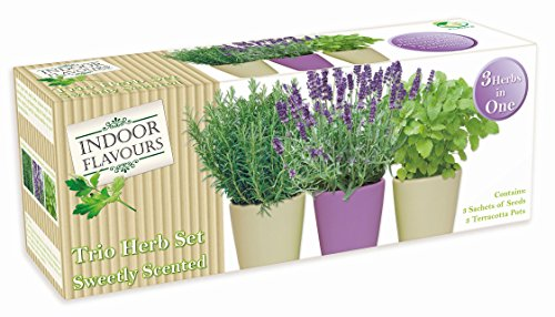 indoor-herb-garden-seed-kit-gift-grow-your-own-box-trio-herb-sets-various-sets-flavours-available-sw