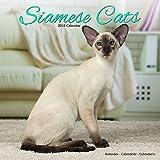 Kalender 2018 Siamkatzen - Siamesen - Siamese Cats mit kostenloser Weihnachtskarte