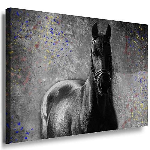 Qn Poster (Julia-art Leinwandbilder - Schwarzes Pferd Bild 1 teilig - 70 mal 50 cm Leinwand auf Rahmen - sofort aufhängbar ! Wandbild XXL - Kunstdrucke QN.170-3)