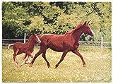 Brandsseller Tiermotiv Decke Kuscheldecke Tagesdecke Wohndecke 150x200 cm Motiv: Pferde