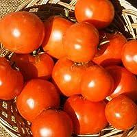 GEOPONICS 1 oz: Tomate JARDIN- RUTGERS VF - NON-GMO, herencia, SEED VEGABLE JARDINERÃA