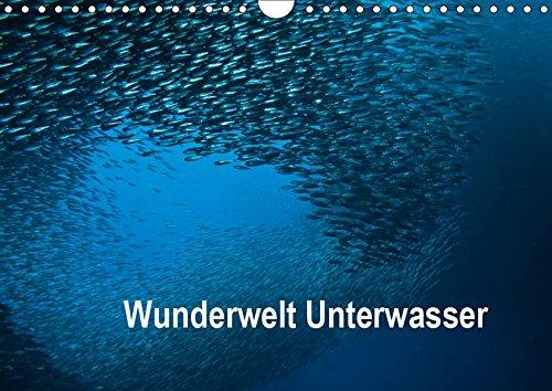 Wunderwelt Unterwasser (Wandkalender 2019 DIN A4 quer): Tauchen in Moaboal/Philippinen (Monatskalender, 14 Seiten ) (CALVENDO Tiere)