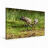Premium Textil-Leinwand 90 cm x 60 cm quer Altvögel mit 1. Küken und angepicktem Ei | Wandbild, Bild auf Keilrahmen, Fertigbild auf echter Leinwand, Leinwanddruck