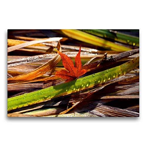 Calvendo Premium Textil-Leinwand 75 cm x 50 cm quer, Ahornblatt mit Tropfen-Gras | Wandbild, Bild auf Keilrahmen, Fertigbild auf echter Leinwand, Leinwanddruck Natur Natur