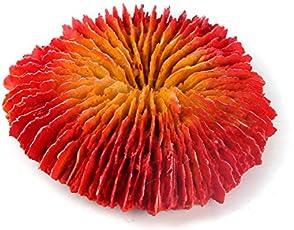Sri SZ-504 Aquarium Decorative Artificial Coral Ornament for Fish Tank, Multicolor (Small)