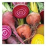 Rote Beete - Rote Rüben Mix - 3 verschiedene Sorten - 100 Samen
