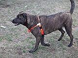 Würge-freies, zerr-freies, von vorne führendes Hundegeschirr, Originalausführung, Größe 3 kg bis 113 kg, 10 Farben