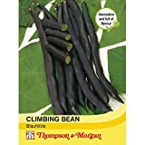 Thompson & Morgan - Vegetables - Climbing Bean Blauhilde - 75 Seed