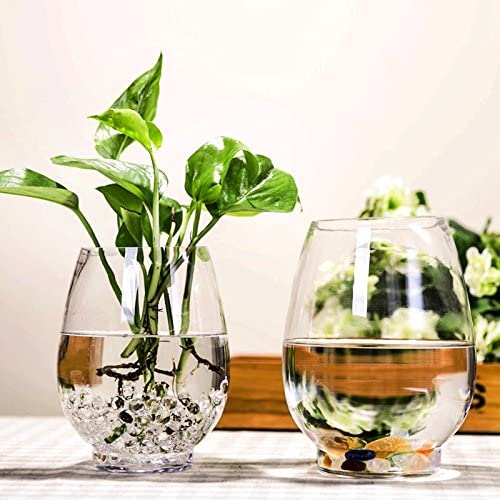 ZHFC-vaso in vetro trasparente dell'uovo di dinosauro, vaso, acqua pratica semplice acqua vaso, cultura, fiori, piante, oggetti di vetro, (uova di dinosauro) a3ad71