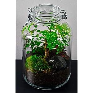 Flaschengarten Typ 1 DIY-Set/Terrarium/Biotop/Ökosystem: stilvolles Wohnaccessoire mit echten Pflanzen, ideal als Geschenk