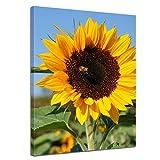 Bilderdepot24 Kunstdruck - Sonnenblume mit Biene - Bild auf Leinwand - 50 x 60 cm - Leinwandbilder - Bilder als Leinwanddruck - Wandbild Pflanzen & Blumen - Natur - gelbe Sonnenblumen