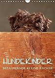 Hundekinder - Bezaubernde kleine Racker (Wandkalender 2019 DIN A4 hoch): Hindekinder vor der Kamera. (Monatskalender, 14 Seiten ) (CALVENDO Tiere)