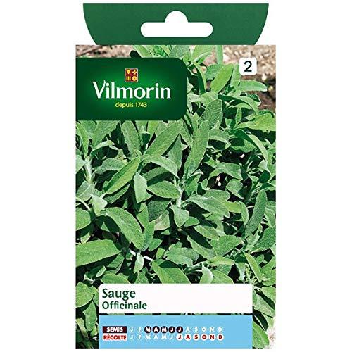 Vilmorin - Sachet graines Sauge officinale