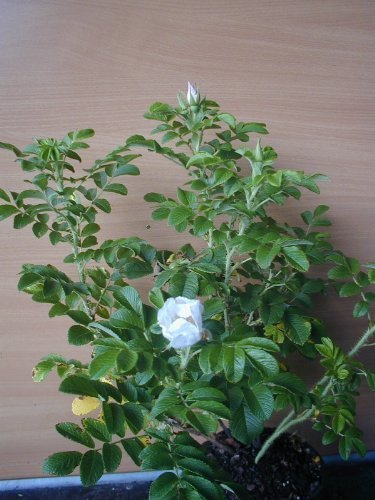 Plantenwelt 21048