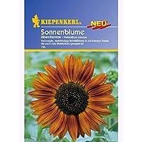 N.L.Chrestensen Sonnenblume Abendsonne Samen Blumen für ca.30 Pflanzen
