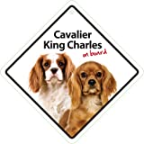 Magnet & Steel 23-3651 Señal Ventosa Cavalier King Charles on Board, 14 x 14 cm