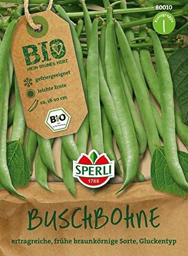 Bohnensamen – Bio-Buschbohne (grüne Bohne) Maxi – Bio-Saatgut von Sperli-Samen