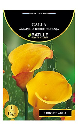 Semillas Batlle Bulbe d'arum Bord orange