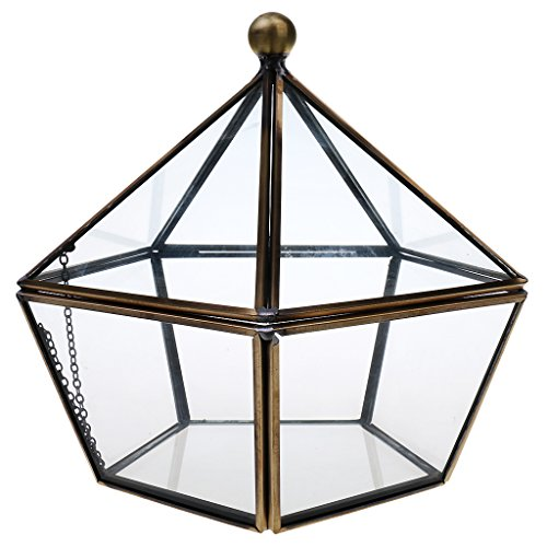 Homyl Luft Pflanzer Mini Glas Terrarium Geometrisches Glas Sukkulente Pflanzen Pflanzgefäß...