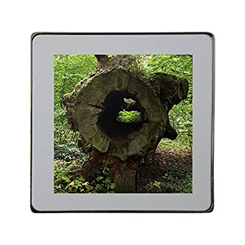 Metal square fridge magnet with Big hollow trunk of a cut down tree