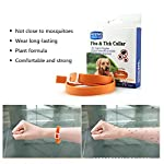 umiwe adjustable flea and tick collar for cats dogs natural herbal anti flea collar waterproof non-toxic flea collar for small medium large dogs UMIWE Adjustable Flea and Tick Collar for Cats Dogs Natural Herbal Anti Flea Collar Waterproof Non-toxic Flea Collar for Small Medium Large Dogs 51Ks5GqUJDL