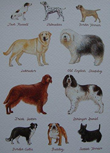 """Jack Russell Terrier, Motiv \""""Dalmatiner\"""", Springer Spaniel, Labrador, Collie Setter Hunde, mit englischsprachiger Aufschrift"""