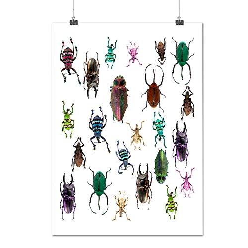 scarabee-type-habitat-insecte-la-matte-glace-affiche-a2-60cm-x-42cm-wellcoda