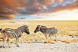 Postereck - Poster 0627 - zwei Zebras, Steppe Afrika wild Tiere Safari Serengeti Größe 3:2 - 30.0 cm x 20.0 cm