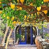 Pinkdose® 50 Teile/beutel Zitronenbaum Bonsai Hohe Überlebensrate Fruchtbonsai Für Zuhause Gatden Balkon Günstige Japanische Topf: Dunkelgrau