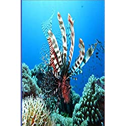 Scuba Diving Log Book: Lionfish Dive Diving Logbook - 6x9 /120 Pages, 216 Dives