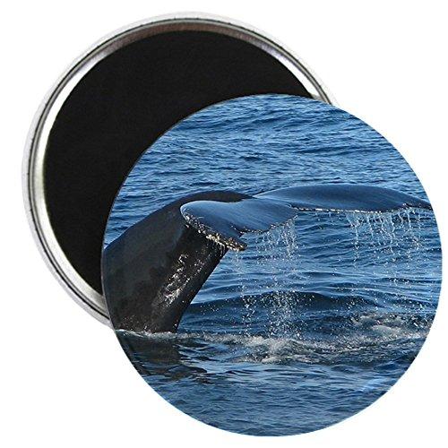 CafePress - Whale Tail II - 5,7 cm runder Magnet, Kühlschrankmagnet Mino Camcorder