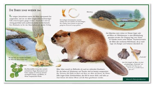 Der Biber - Biberbau - Wawra Naturpostkarte zum Entdecken, Beobachten, Bestimmen - 22 cm x 12 cm