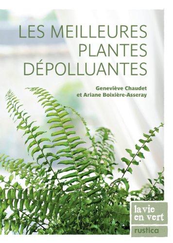 Les meilleures plantes dpolluantes