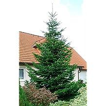 Weihnachtsbaum mit wurzeln kaufen