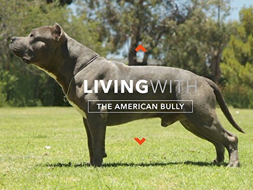 All About Living With The American Bully (Bull Pit Bully)