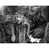 Fototapete Leopard Afrika Vlies Wand Tapete Wohnzimmer Schlafzimmer Büro Flur Dekoration Wandbilder XXL Moderne Wanddeko - 100% MADE IN GERMANY - Runa Tapeten 9201010c
