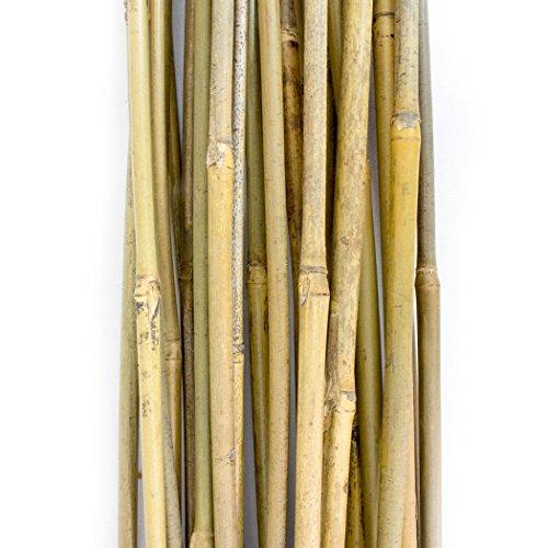 25 estacas de bambú de metro y medio