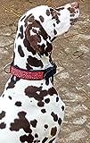 Hundehalsband Galax Halsband Hund BREIT M L XL Tysons Leder Lederhalsband (L, Schwarz Rot)