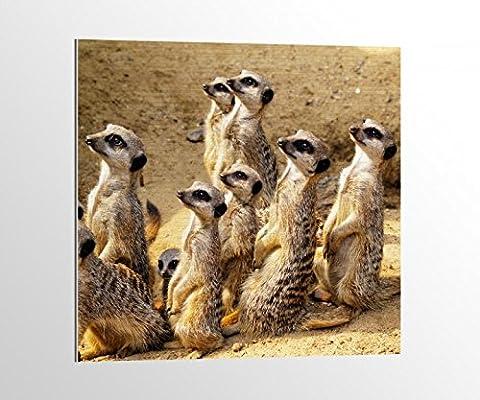 Alu-Dibond Erdmännchen Afrika Wüste Surikate Bild auf Aluminium AluDibond UV Druck gebürstet Wandbild Metall Effekt 16A1919, Alu-Dibond 1:100x100cm