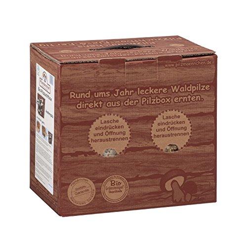 Bio Pilzzucht-Box Fix & Fertig