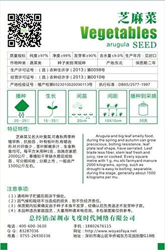 Eruca Sativa Salad Rocket Semences Potagères Arugula organiques, emballage d'origine, 120 graines / Pack, Rucola Colewort