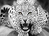 Leopard Tiere Malen Nach Zahlen Kits DIY Digital ÖLgemäLde Auf Leinwand FüR Home Art Wand Bild