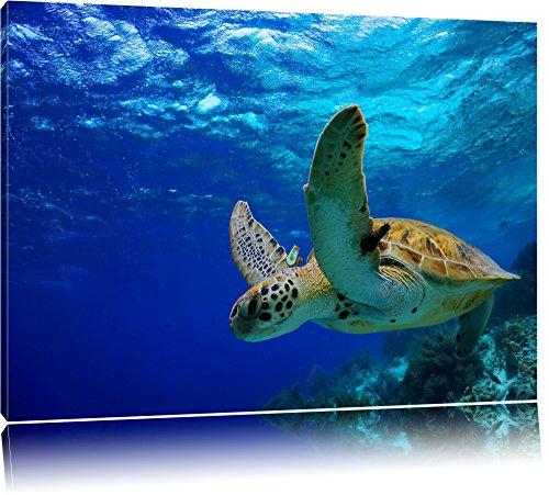 Schildkröte im Riff Format: 60x40 auf Leinwand, XXL riesige Bilder fertig gerahmt mit Keilrahmen, Kunstdruck auf Wandbild mit Rahmen, günstiger als Gemälde oder Ölbild, kein Poster oder Plakat